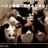 猫ちゃん53匹放置!-神戸市の市営住宅を強制退去の女性-放置すな!
